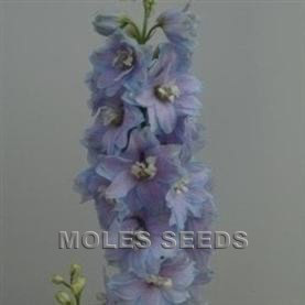 Delphinium Pacific Giants Summer Skies