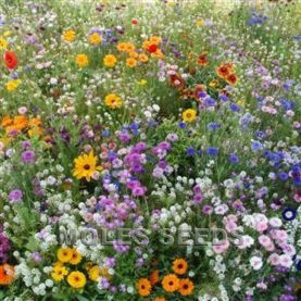 Throw to Grow Meadow Glints