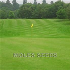 Grass Seed Greens Mix