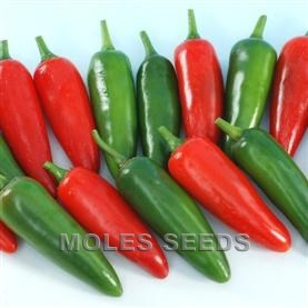 Hot Pepper F1 Rocky
