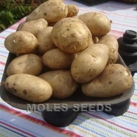 Potato Arran Pilot (25Kg pack)