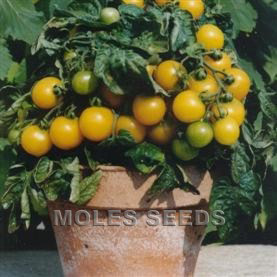 Tomato F1 Balconi Yellow